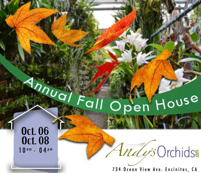 Andys_Orchids_Fall_2017