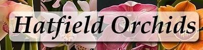 Hatfield Orchids