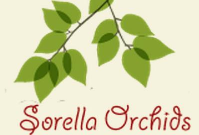 Sorella Orchids