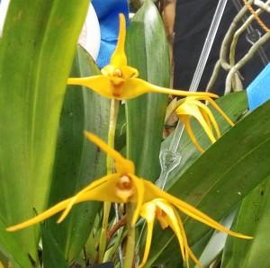 Best-Maxillaria-2019