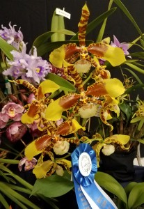 Best-Oncidium-2019