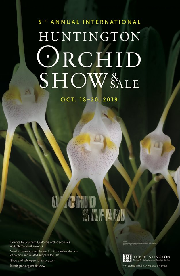 huntington orchisd sale 2019